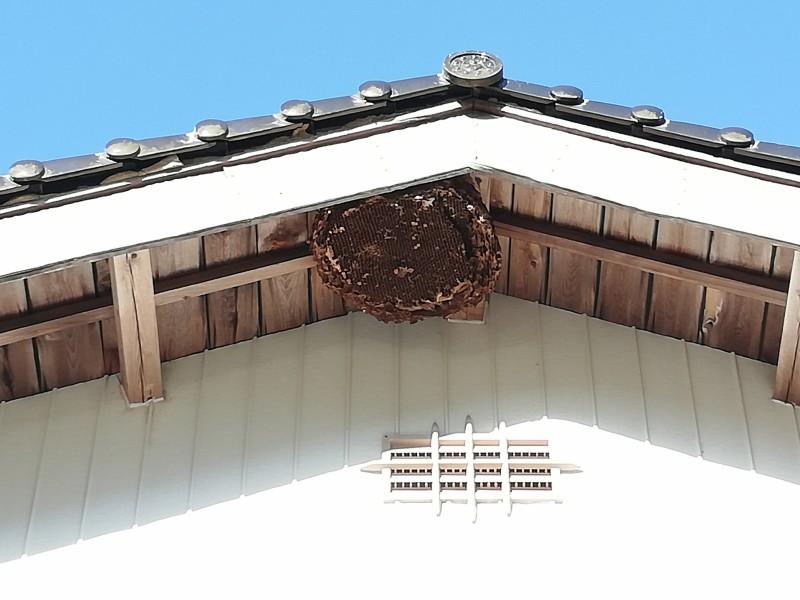 スズメバチの巣の跡
